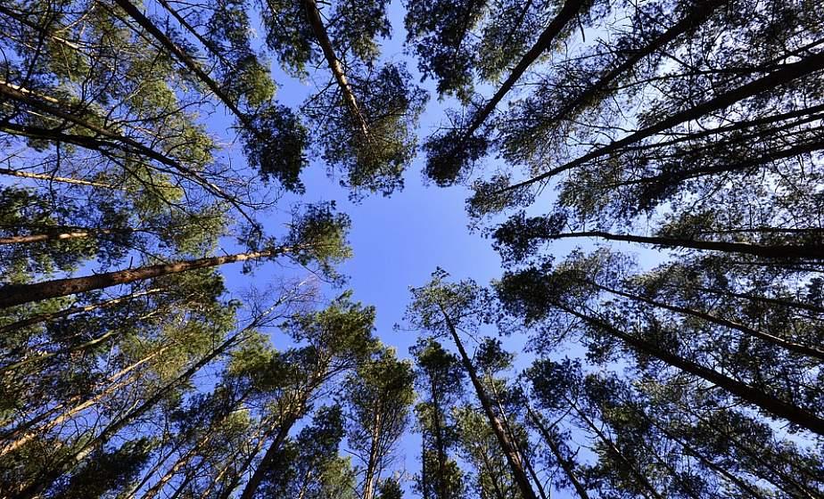 Запрет на посещение лесов введен в четырех районах Гродненской области