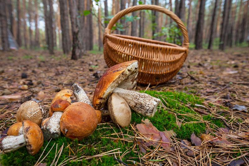 Чем грозит отравление грибами, и с какого возраста их можно есть детям