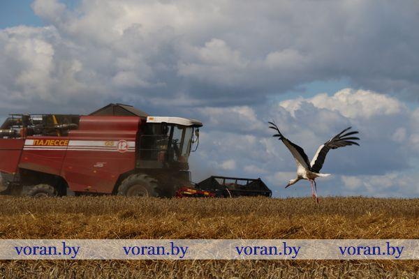 Поздравление с Днем работников сельского хозяйства и перерабатывающей промышленности агропромышленного комплекса