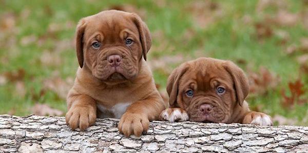 5 причин кастрировать домашних животных