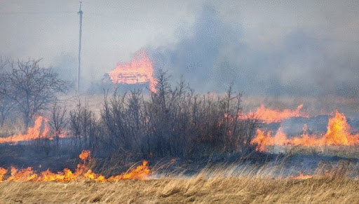 Когда горит трава…