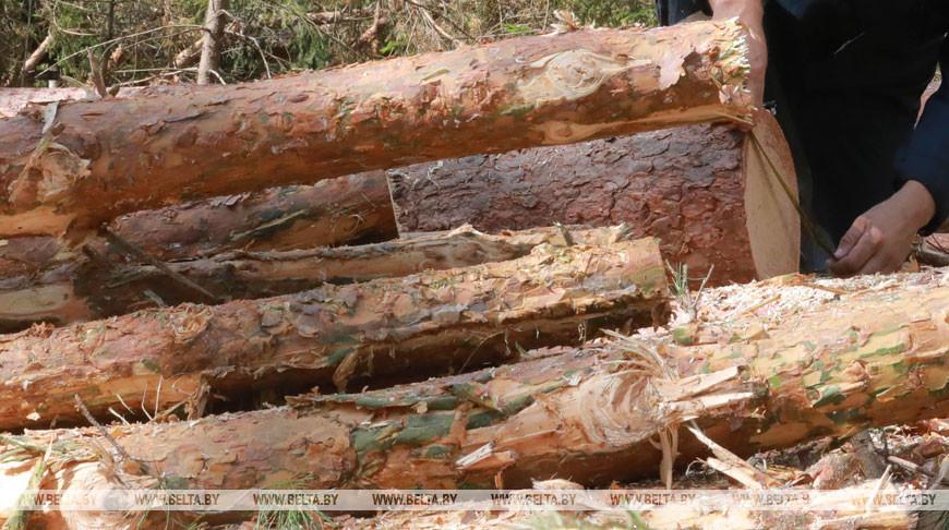Незаконные рубки леса и другие нарушения выявил КГК в Ивьевском лесхозе