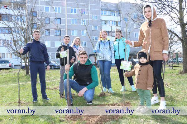 На Вороновщине заложили скверы семейных деревьев