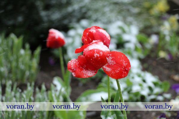 Прогнозы синоптиков оправдались: в Вороново выпал снег (Фото)