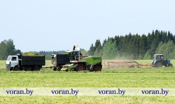 Зеленый конвейер вороновских аграриев  работает ритмично