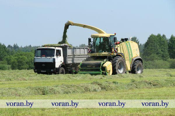 На первый укос большой спрос. Как идет заготовка кормов в Вороновском районе (Фото, Видео)