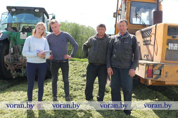 Зеленый стол для буренок готовят в КСУП «Экспериментальная база «Погородно» Вороновского района