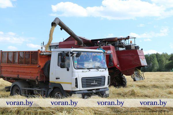 На Вороновщине приступили к уборке озимых зерновых
