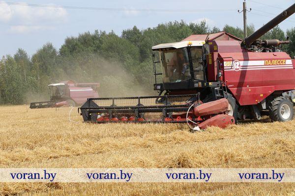 Труженики сельхозпредприятия «Больтишки» первыми в районе завершили уборку зерновых и зернобобовых культур